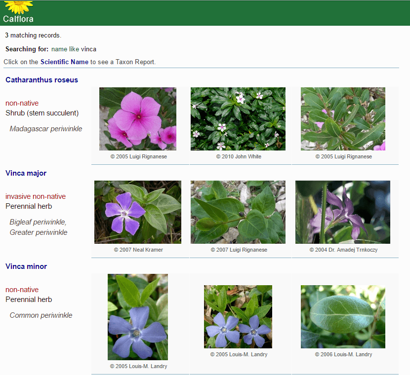calflora search result