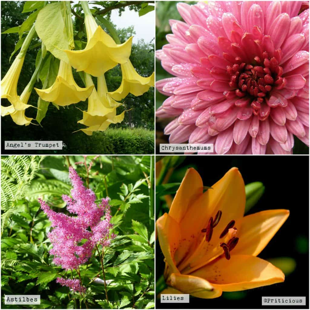 Heavy Feeder Flowering Plants