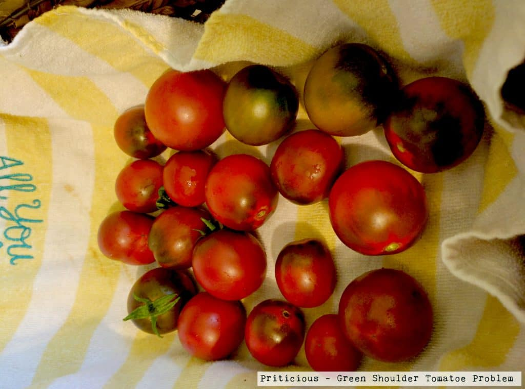 Tomatoes with Green Shoulders